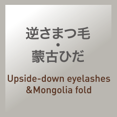 逆さまつ毛・蒙古ひだ:Upside-down eyelashes & Mongolia fold